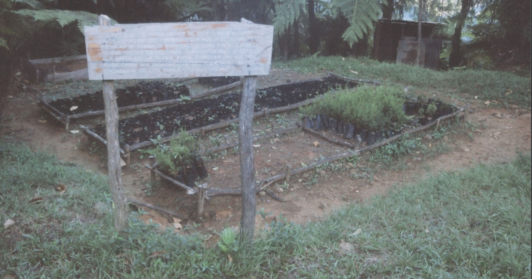 A small nursery for endangered plants, in Parque Nacional Pico Turquino